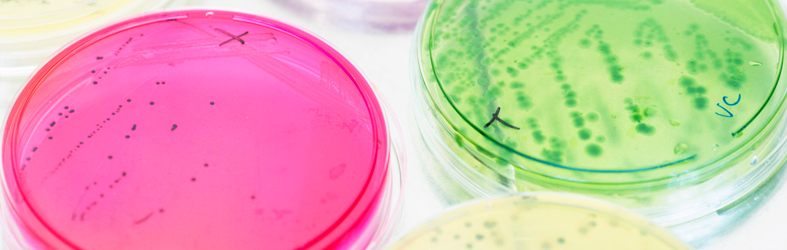STC Group, Microbiology & Sanitation | Antimicrobial